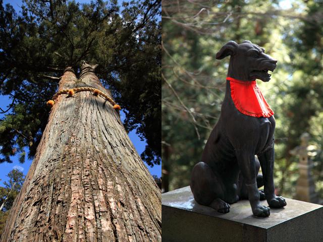 御神木と山犬様