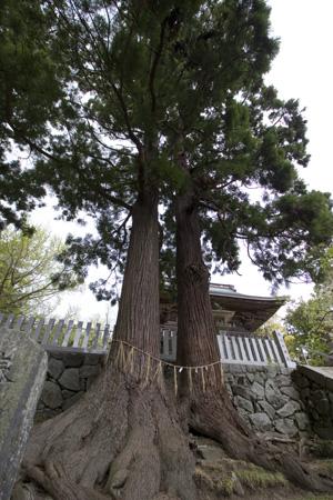 tsukujin1.jpg